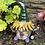 Thumbnail: Gnome- Neddie Buttercup