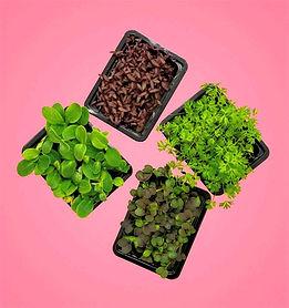 Mini Crops