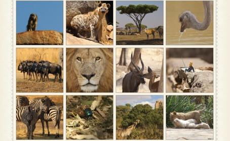 Lion & Cheetah Park Calendar