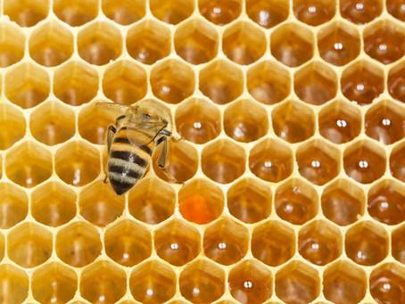 Bee Keeping in Zimbabwe