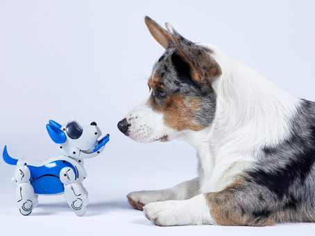 No Robot Dogs