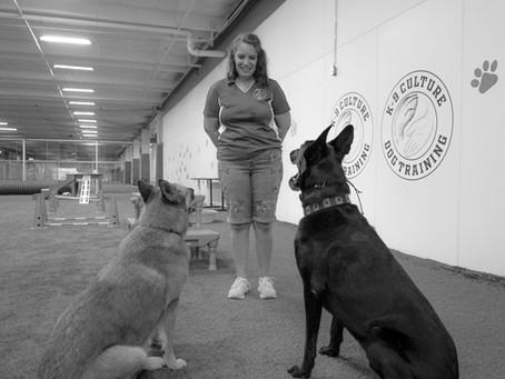 "Saying ""No"" in Dog Training"