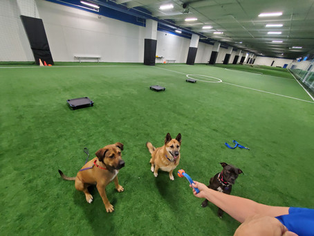 Can Obedience Commands Save A Dog's Life?
