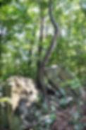 SC_Tree.jpg