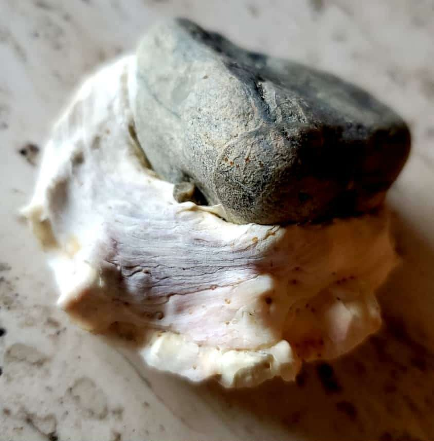 Shell fossilized around a rock
