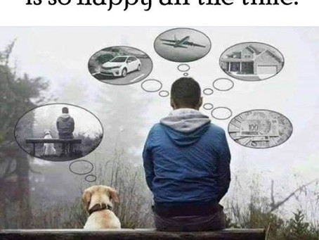 Why are animals happier?
