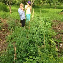 Ikšķiles Brīvās skolas dārza redzējums