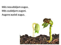 Skolu dārzu dārzeņi - izaicinājums un prieks!