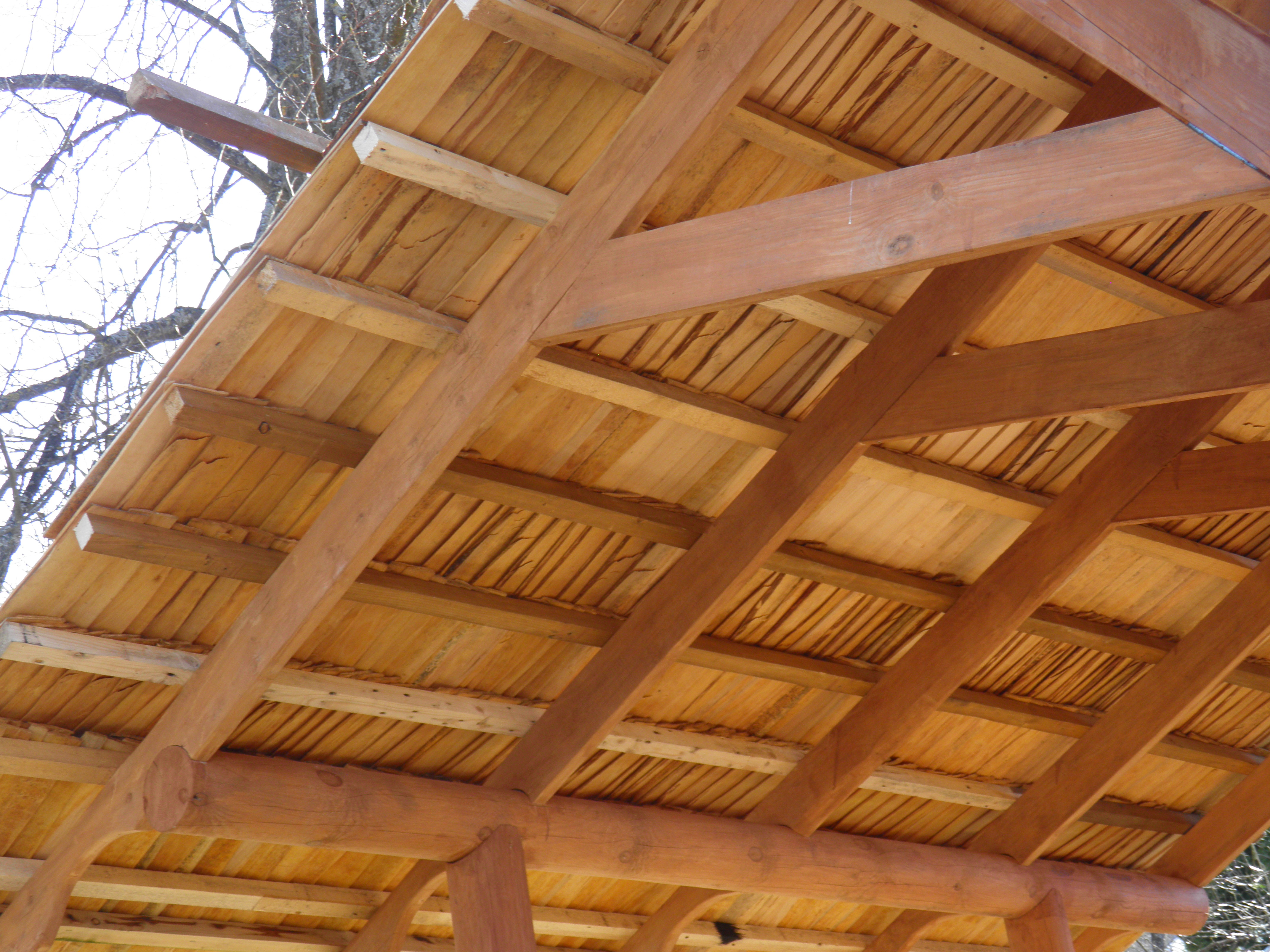 Underneath of the black-alder roof