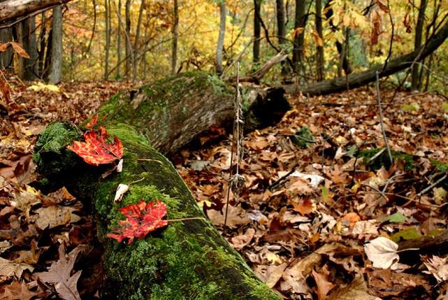 Zemsedze mežā - komposta piemērs