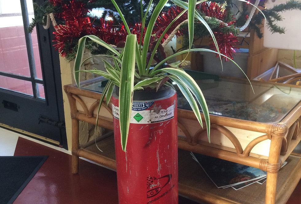 Aluminium cylinder flower pot with plants
