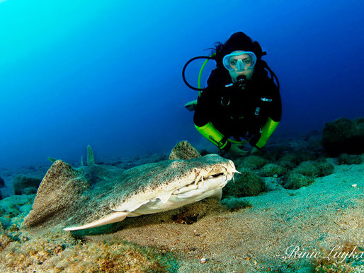 Safari Diving and Dive College Are Open, Lanzarote open to holiday makers.