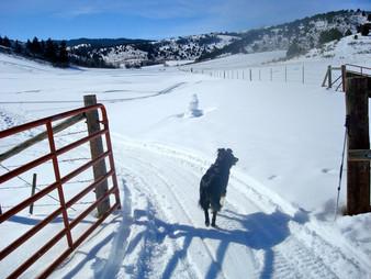 Baker Ranch snowshoeing, Lava Hot Springs