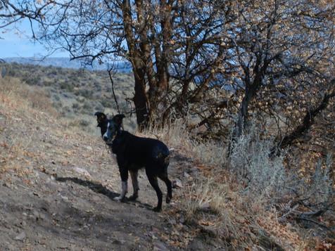 Bell Marsh Canyon, Idaho