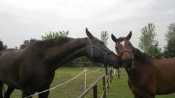 Nino e Pallina - I Pioppi