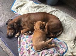 Betty e cucciolo - I Pioppi