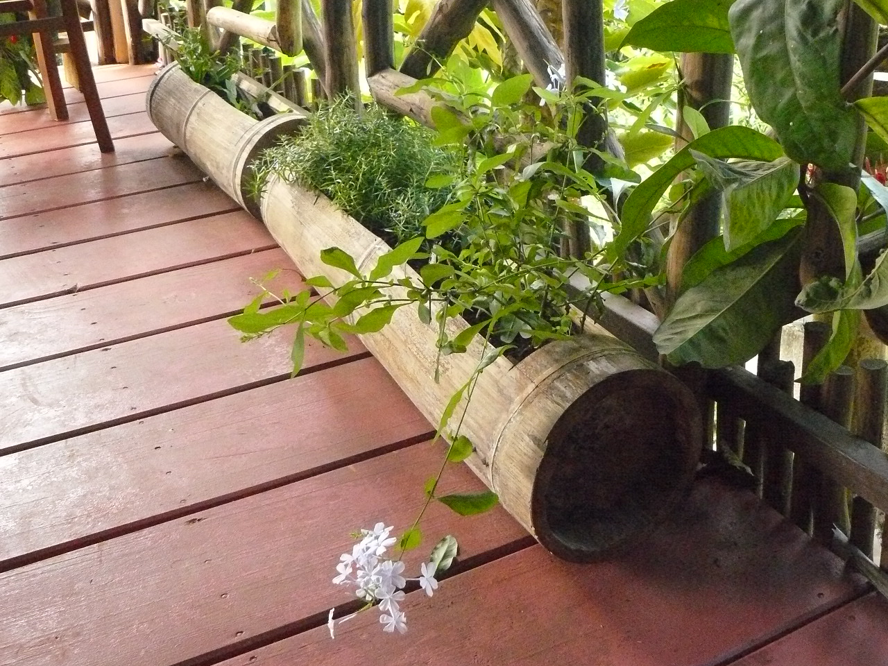 Mayotte_Combani_Relais Forestier_2