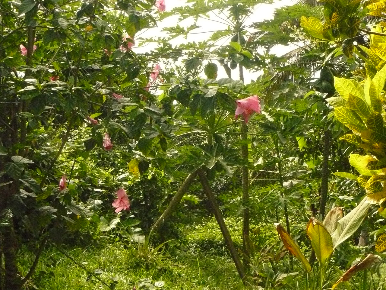 Mayotte_Combani_Relais Forestier_11