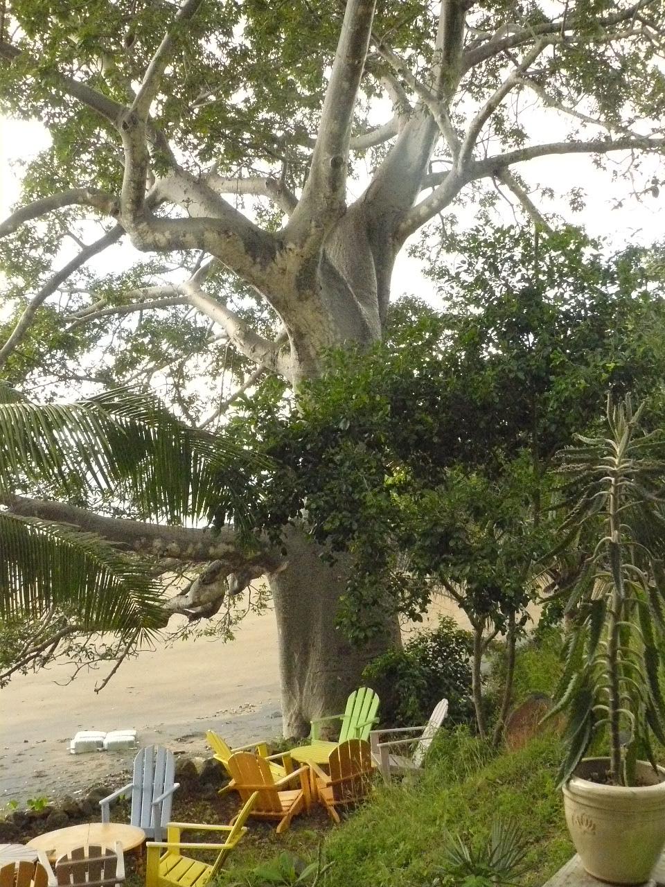 Mayotte_Combani_Bamboo_Géants_39