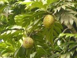 Mayotte_Combani_Relais Forestier_10
