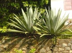 Mayotte_Combani_Relais Forestier_3