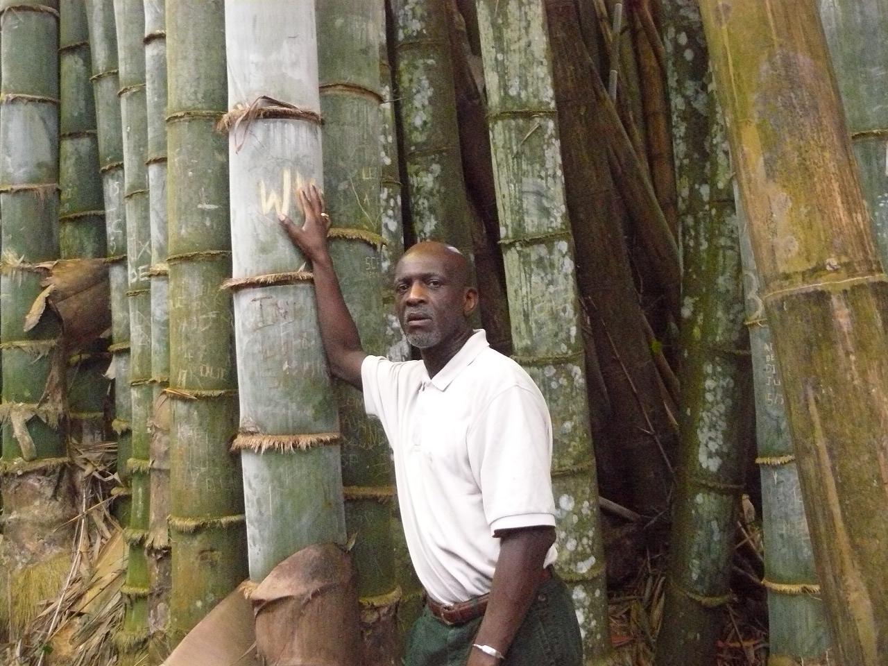 Mayotte_Combani_Bamboo_Géants_MJ_Vieyra_34