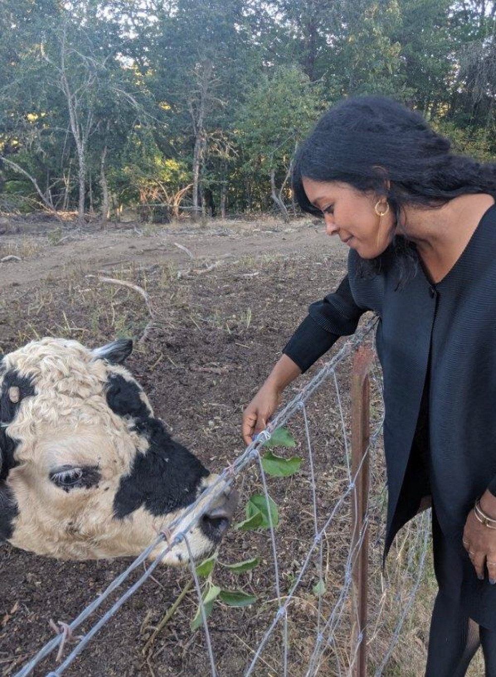 Yvette connecting with a cow by gently extending her hand. They are separated by a wire fence.