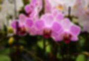 DSC_3990_edited.jpg