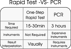 RT vs PCR.png