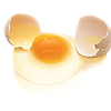 FA SQ Egg Photo-01.png