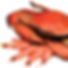 FA SQ Shellfish Photo-01.png