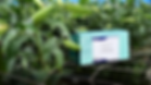 Lily site - LMoV box.png