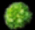 AV Lettuce 5.png