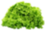 purepng.com-green-lettucevegetablessalad