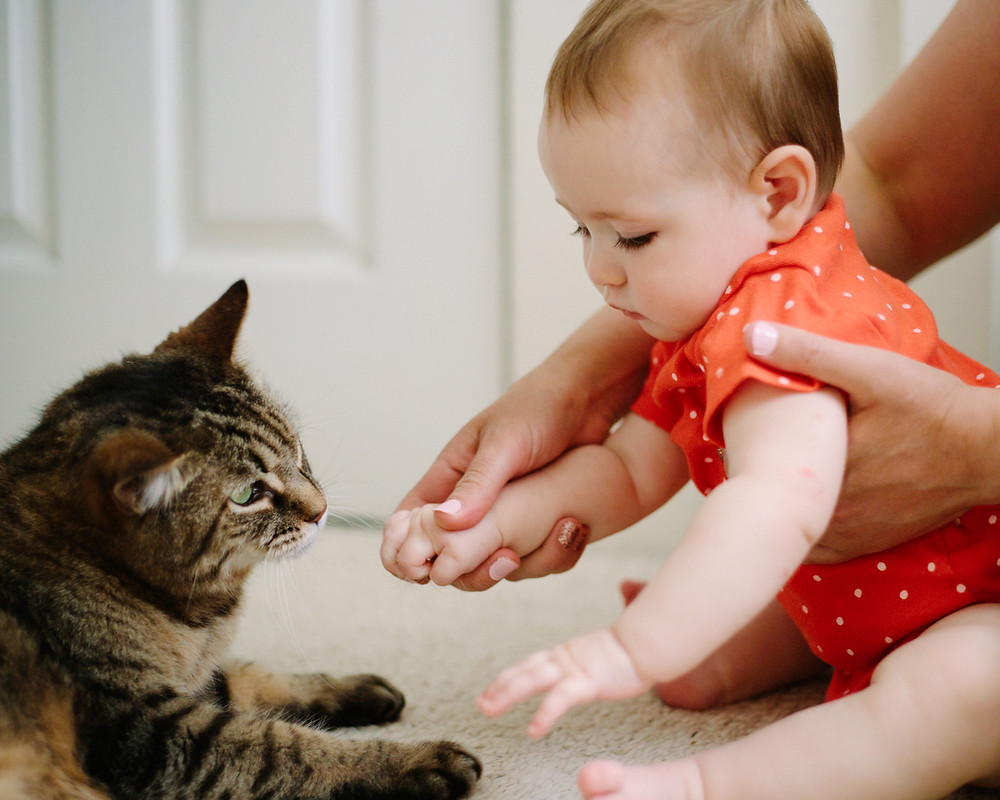 Portrait of 8-month old and her cat for in-home family session in Pittsburgh, Pa  by LeeAnn K Photography