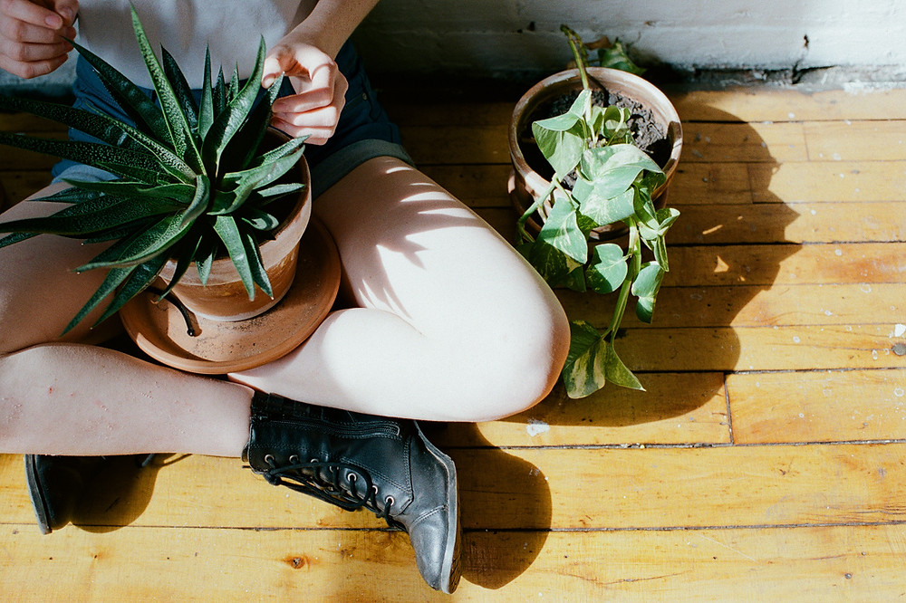 Portrait of plants on portra 400 film by LeeAnn K Photography