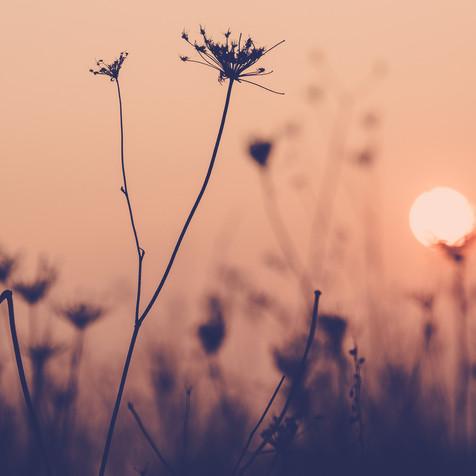 """Sonnen""-Blume"
