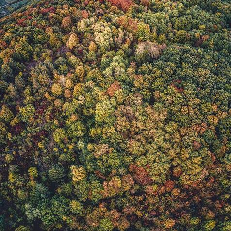 Herbstwald von oben