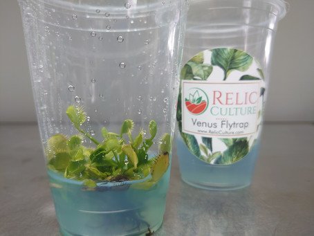 Changing the Paradigm of Plant Packaging