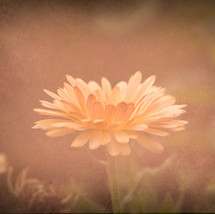 Enchanted Flower
