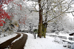 snow wedding_nologosmall