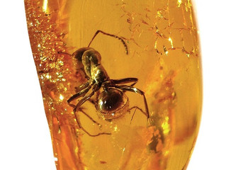 AMBER (ENCAPSULATING MIRACLES IN PETRIFIED RESIN)