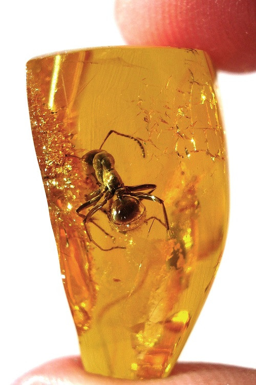 Amber piece, carrying a trapped fossilized insect.
