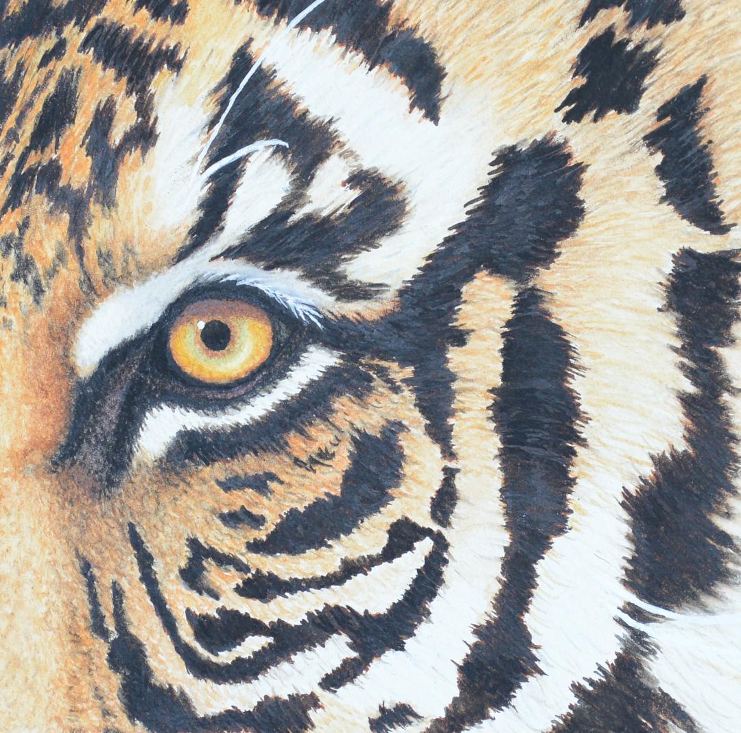 Eye of the Tiger -Atkinson