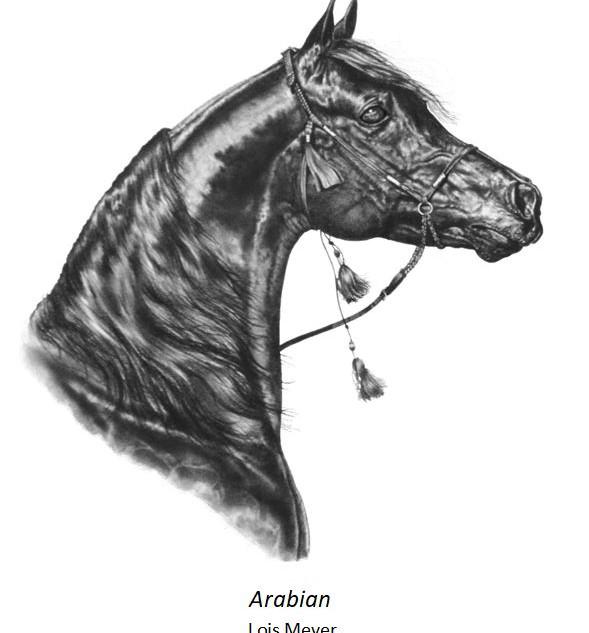 Arabian - Lois Meyer