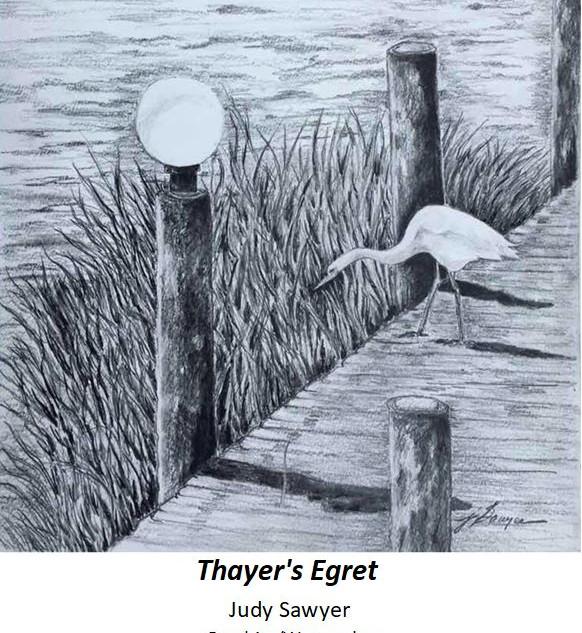 Thayer's Egret - Judy Swayer - Graphite