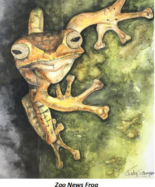 Zoo News Frog - Judy Sawyer