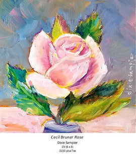 Cecil Bruner Rose - Dixie Sampier