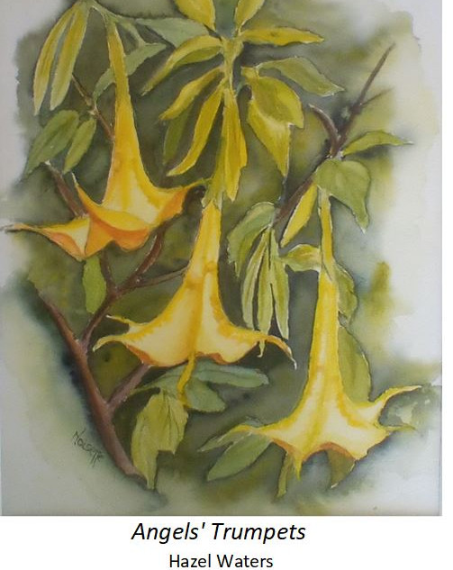 Angels' Trumpets - Hazel Waters
