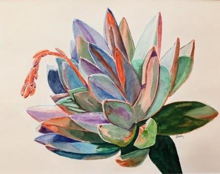 Sunny Succulent - Freeman